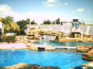 イルカショーの池